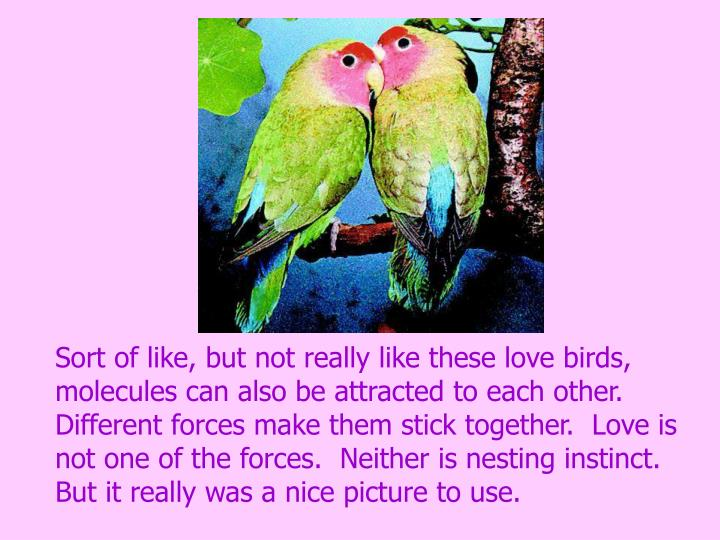 Sort of like, but not really like these love birds, molecules can also be attracted to each other.  Different forces make them stick together.  Love is not one of the forces.  Neither is nesting instinct.
