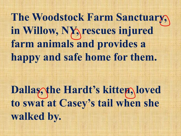 The Woodstock Farm Sanctuary, in Willow, NY, rescues injured farm animals and provides a happy and safe home for them.