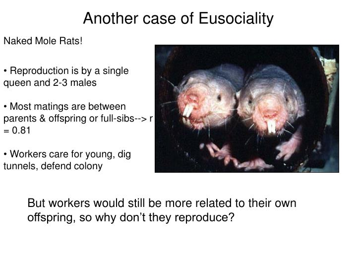 Another case of Eusociality