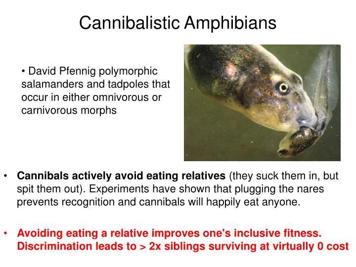 Cannibalistic Amphibians