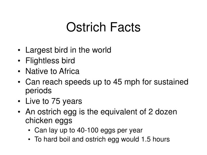 Ostrich Facts