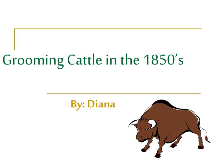 grooming cattle in the 1850 s
