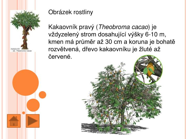 Obrázek rostliny