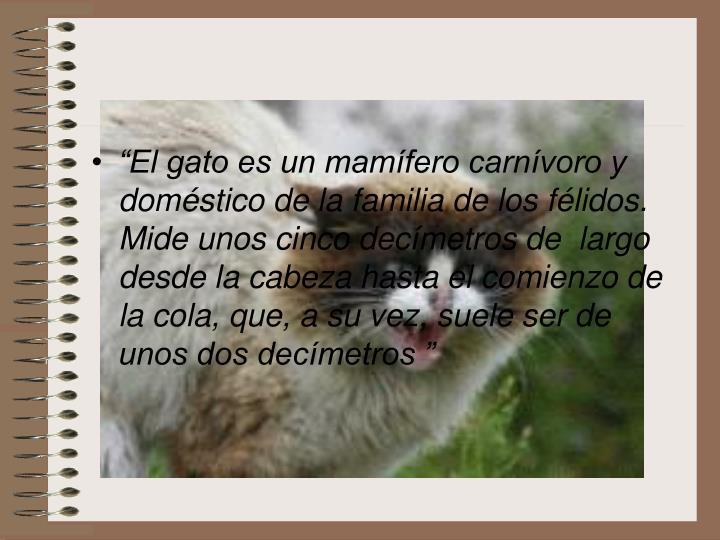 """""""El gato es un mamífero carnívoro y doméstico de la familia de los félidos. Mide unos cinco decímetros de  largo desde la cabeza hasta el comienzo de la cola, que, a su vez, suele ser de unos dos decímetros """""""