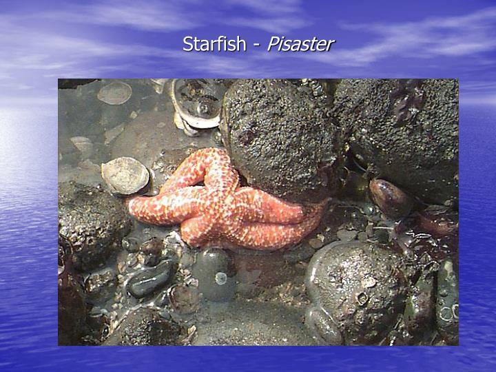 Starfish -