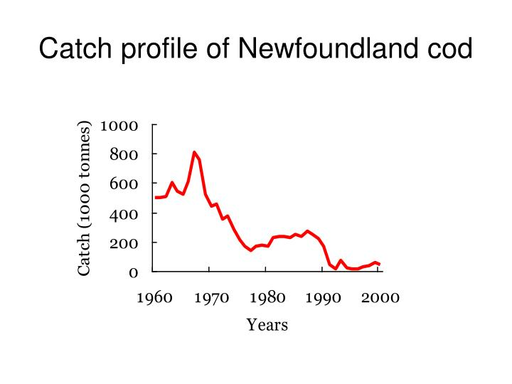 Catch profile of Newfoundland cod