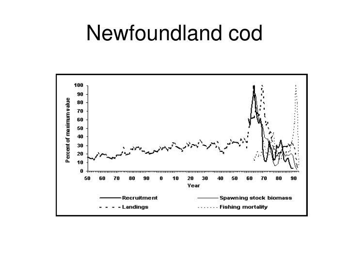 Newfoundland cod