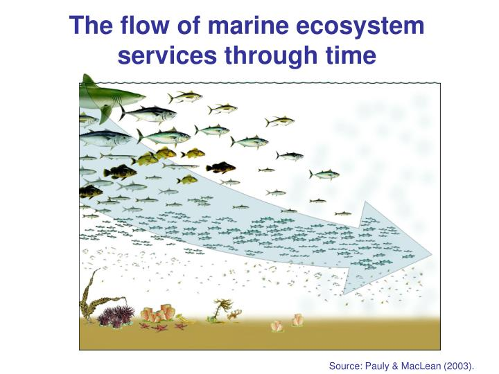 The flow of marine ecosystem services through time