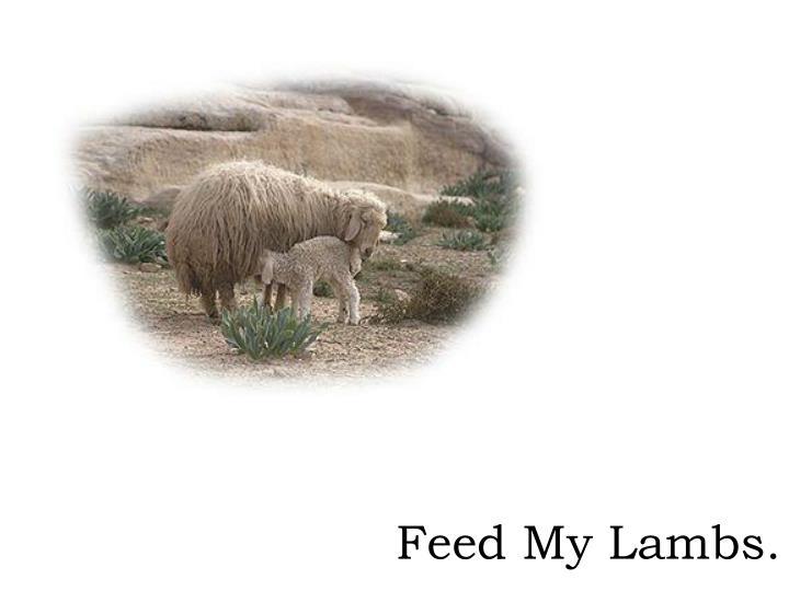 Feed My Lambs.