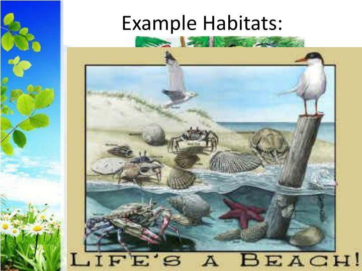 Example Habitats: