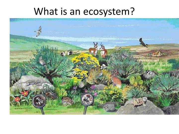 What is an ecosystem?
