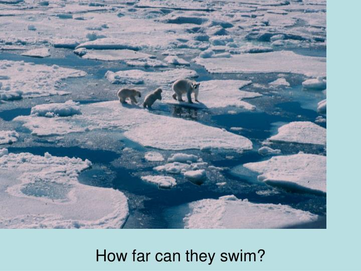 How far can they swim?