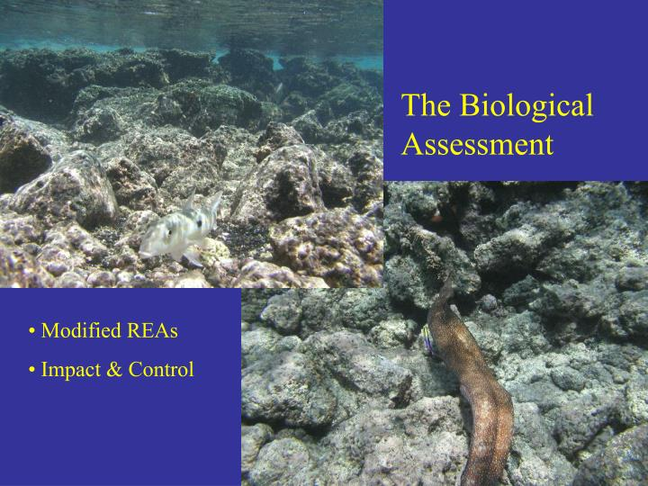 The Biological Assessment