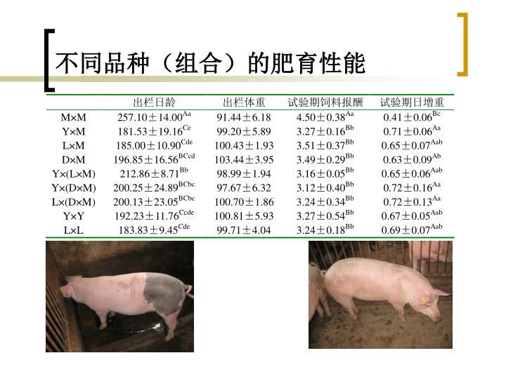 不同品种(组合)的肥育性能