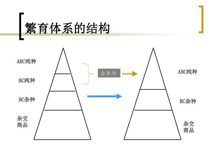 繁育体系的结构