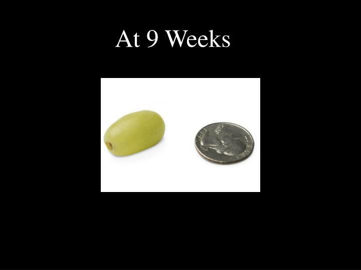 At 9 Weeks