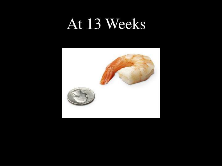 At 13 Weeks