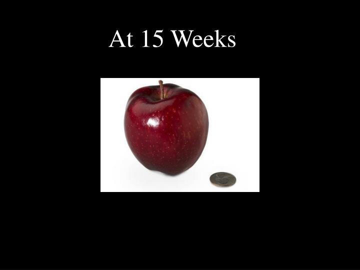 At 15 Weeks