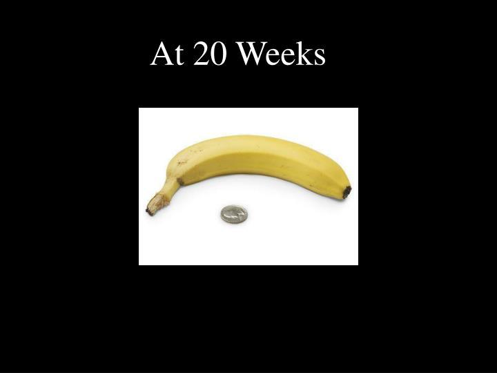 At 20 Weeks