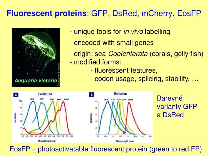 Fluorescent proteins