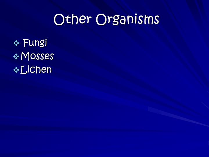 Other Organisms