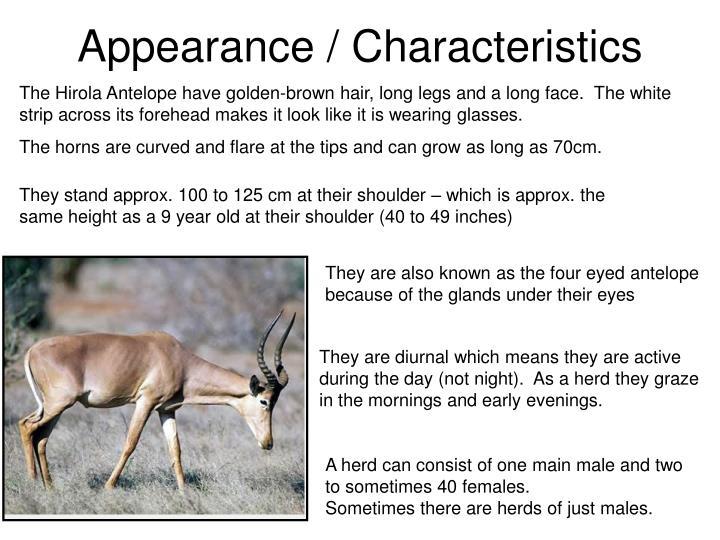 Appearance / Characteristics