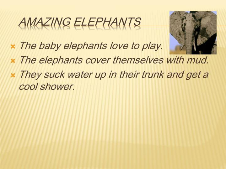The baby elephants