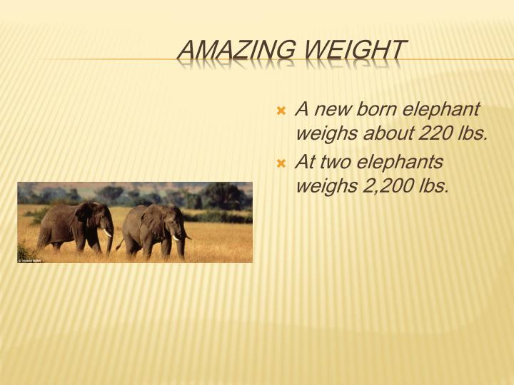 amazing weight