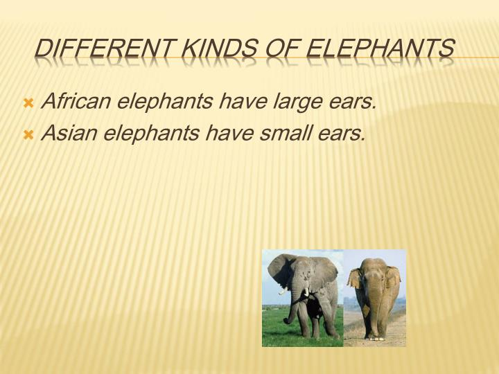 Different kinds of elephants