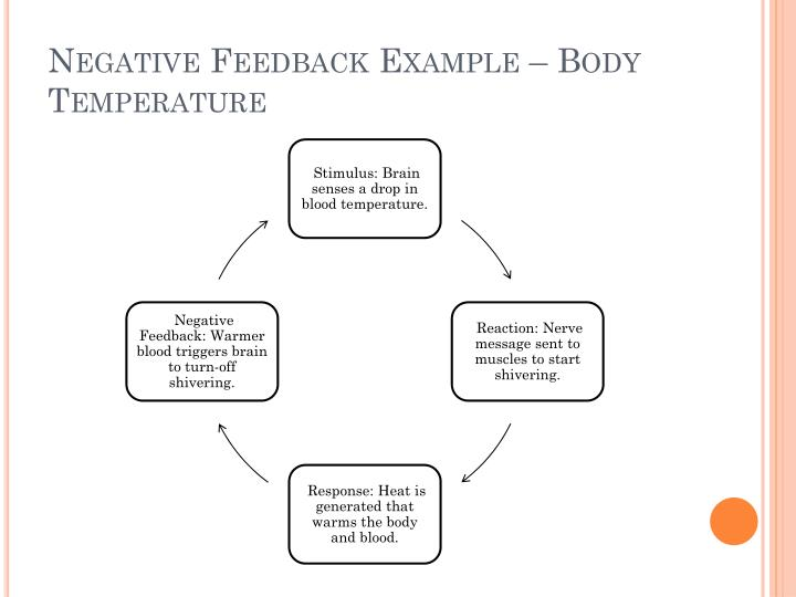 Negative Feedback Example – Body Temperature