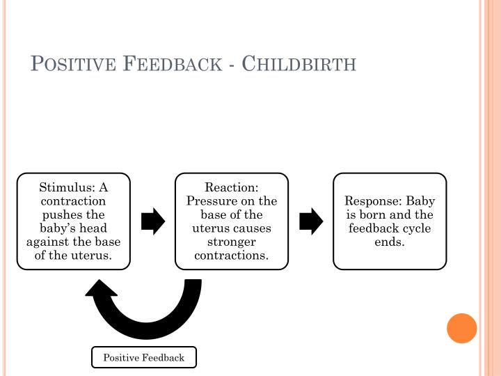 Positive Feedback - Childbirth