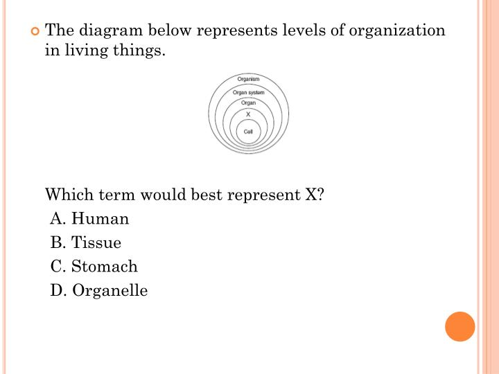 The diagram below represents levels of organization in living things.
