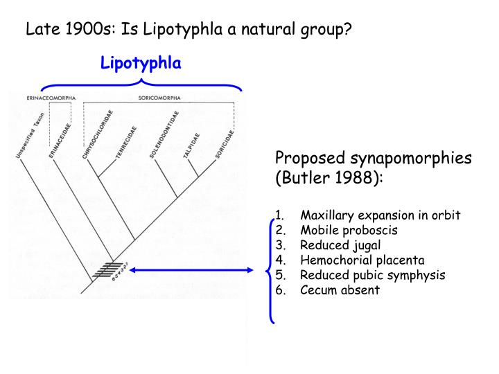 Late 1900s: Is Lipotyphla a natural group?