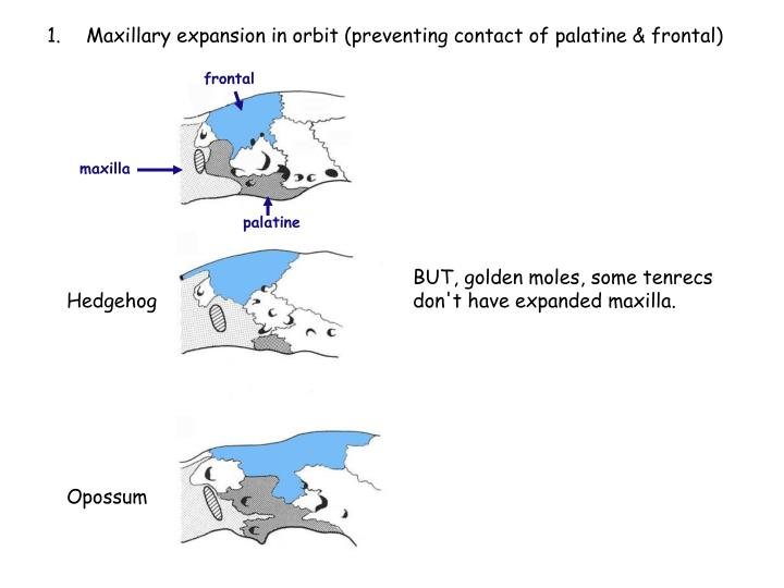 Maxillary expansion in orbit (preventing contact of palatine & frontal)