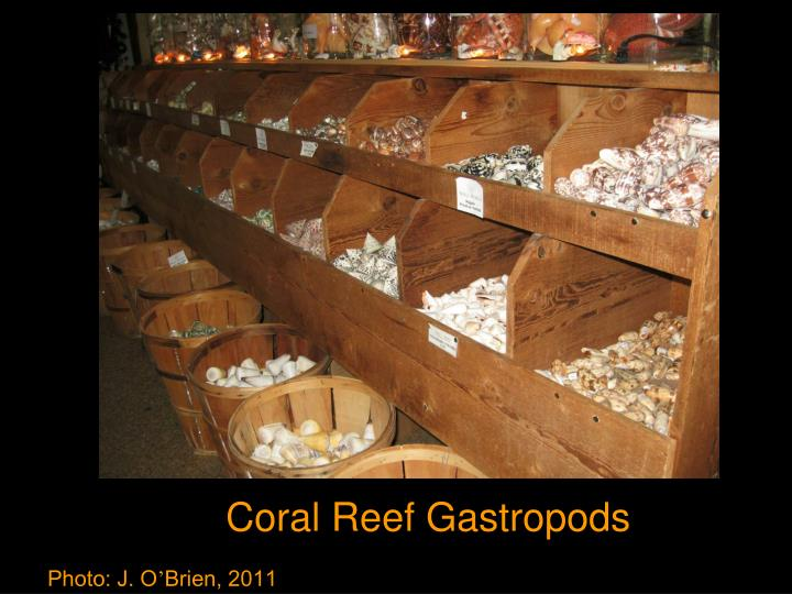 Coral Reef Gastropods