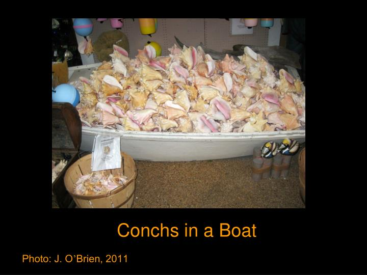 Conchs in a Boat