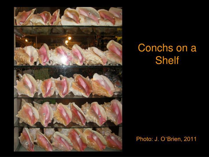 Conchs on a Shelf