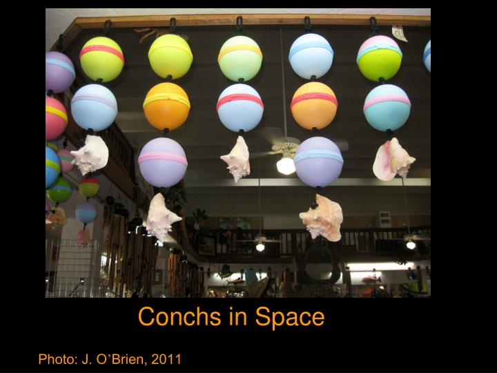 Conchs in Space