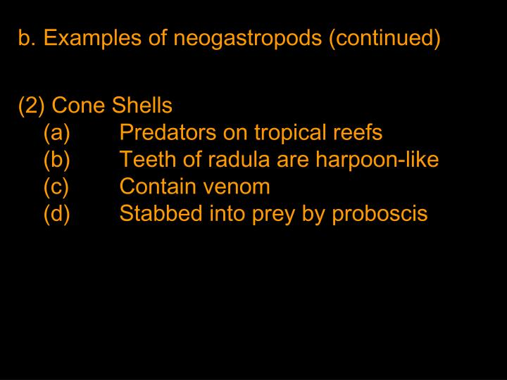 Examples of neogastropods (continued)