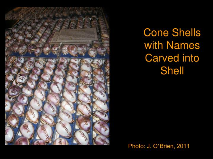 Cone Shells with Names Carved into Shell