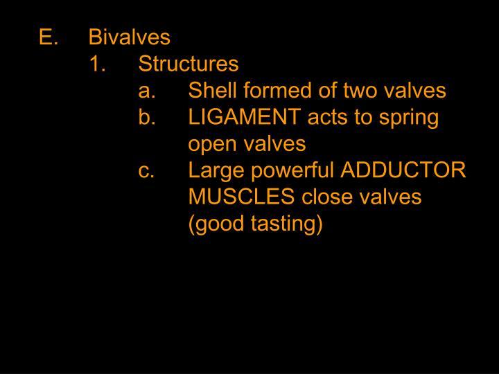 E.Bivalves
