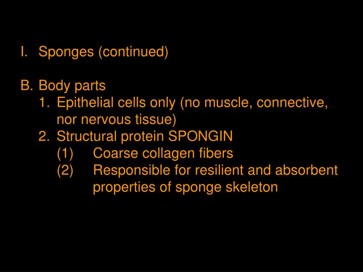 I.	Sponges (continued)