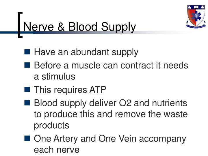 Nerve & Blood Supply