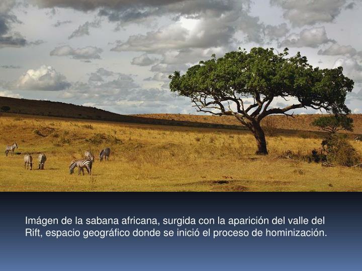 Imágen de la sabana africana, surgida con la aparición del valle del Rift, espacio geográfico donde se inició el proceso de hominización.