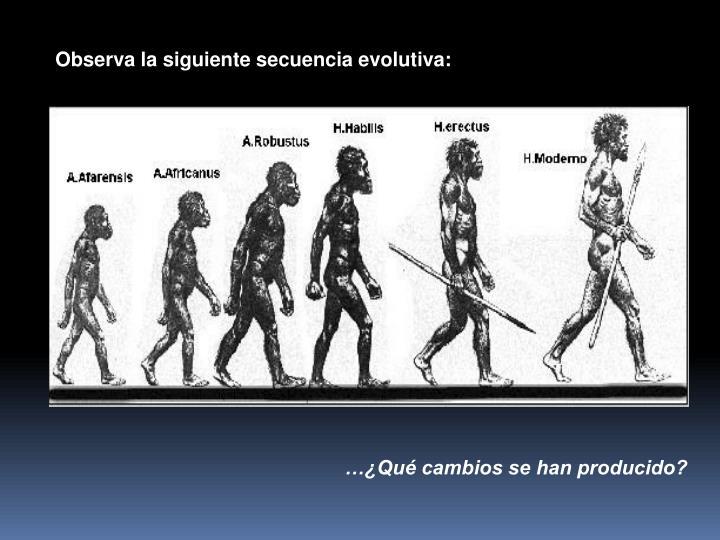 Observa la siguiente secuencia evolutiva: