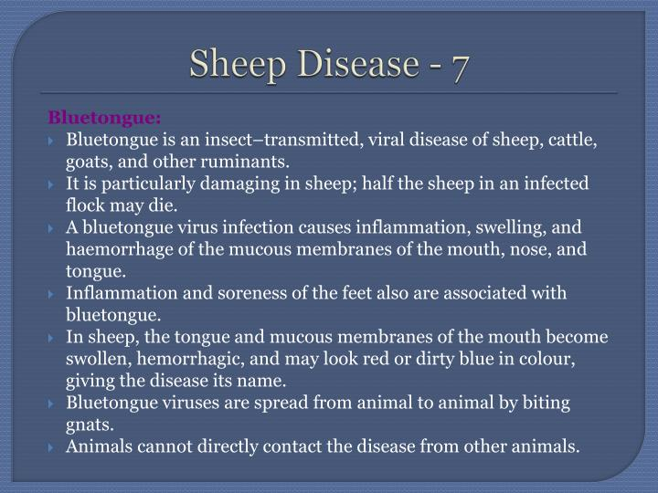 Sheep Disease - 7