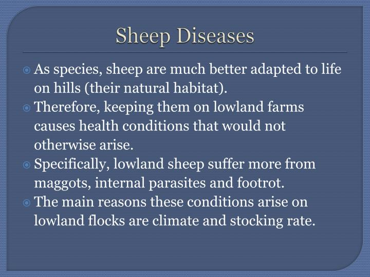 Sheep diseases