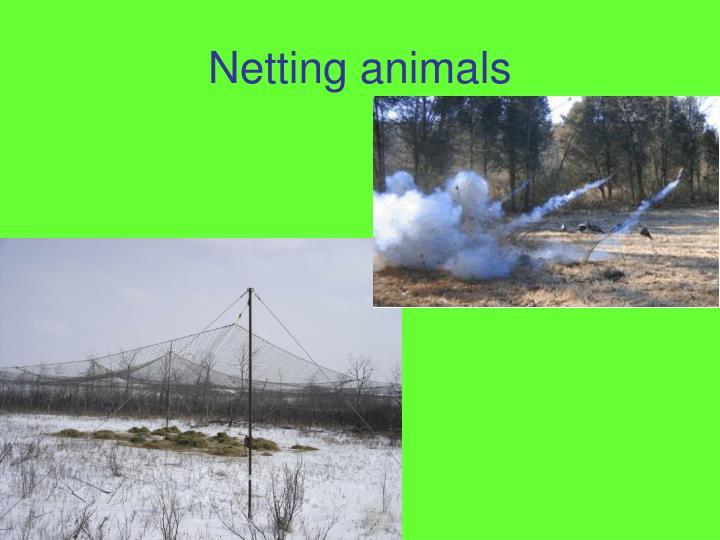 Netting animals