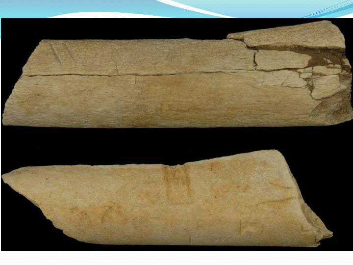 2,6 mln lat mają nastarsze znalezione narzędzia kamienne (Kada Gona, Etiopia), ale ślady ich używania sięgają nawet 3,4 mln lat (Afar). Od tego momentu, w którym powstają pierwsze, czytelne w zapisie kopalnym ślady kultury homininów, rozpoczyna się też ten odcinek naszej przeszłości, który możemy badać metodami archeologicznymi. Jego nastarsza część to dolny paleolit, obejmujący okres od 2,6 milionów do 350 tysięcy lat BP.