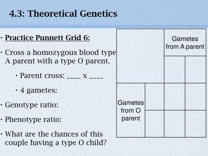 4.3: Theoretical Genetics